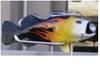 9180chopperfish2.JPG